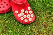 Red shoes with daisies on grass