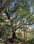 Blackoaktree