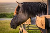 stock photo of feeding horse  - Grazing Horse behind the Fence at Sunset - JPG