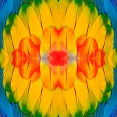 Close Up Of Beautiful Scarlet Macaw Wing Feathers Inyellow Flower Background
