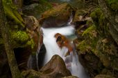 Avalanche Creek Close Up