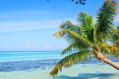 Tropical Sea Palm View