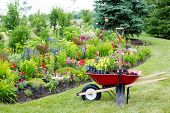 stock photo of manicured lawn  - Work being done in the yard landscaping the garden with a red wheelbarrow standing on a manicured lawn alongside a new flowerbed full of colorful flowering plants - JPG