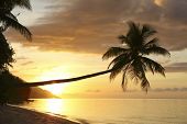 Coconut palm on tropical island beach at sunset