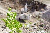 Tree Over Basalt Quarry With Excavator