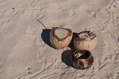 Three Coconuts On Sand