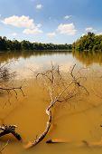 Muddy Brown Jungle Lake