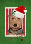Christmas Welsh Terrier