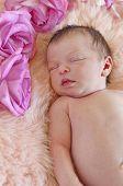Closeup of baby sleeping next to roses