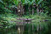 picture of negro  - Lake Balinsasayao in Dumaguete on Negros Island Philippines - JPG