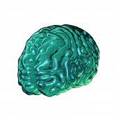 Glass Brain