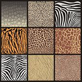 picture of cheetah  - Illustration texture skins of wild animals living in Africa - JPG