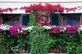 Balcony Garden In Blossom