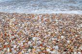 Seashell's Shore.