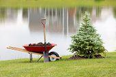 Planting An Ornamental Evergreen Cypress