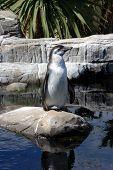Single Penguin