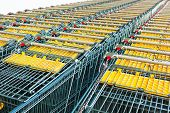 shopping carts in a rows