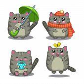 Cute fat gray cat