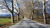 Quiet Road Scene