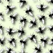foto of blowfly  - Illustrated design of common flies with shadows - JPG