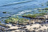 Low tide in Santa Barbara, California exposes beautiful tide pools and green algae covering the sharp reef.