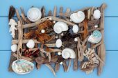 picture of driftwood  - Sea shell - JPG