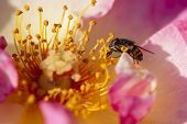 Fly On Colorful Roses