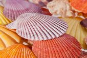 some different  beautiful colorful sea shells macro