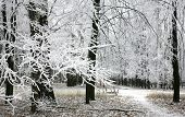Snow Covered Branches In The Autumn Forest