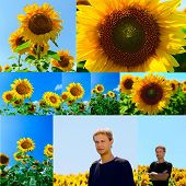 collage of flowers of sunflower and young man in the field