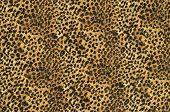 Brown leopard pattern.