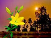 Colorful Yellow Lily