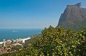 picture of gneiss  - View of Sao Conrado Beach Through Trees and Pedra da Gavea Rock - JPG