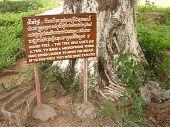 Tree at Killing Fields in Cambodia