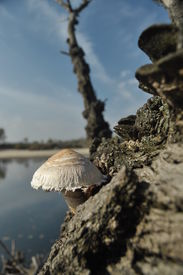 picture of spores  - Mushrooms in the forest - JPG