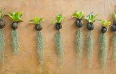 image of tillandsia  - Spanish moss hanging strand and Bird of nest fern - JPG