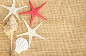 picture of shell-fishes  - Shells and star fish on sace background for frame - JPG