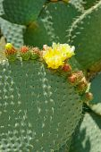 Part Of Flowing Cactus Leaf.