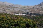 foto of pueblo  - View of whitewashed village (pueblo blanco) and surrounding countryside Cartajima Serrania de Ronda Malaga Province Andalucia Spain Western Europe. ** Note: Shallow depth of field - JPG