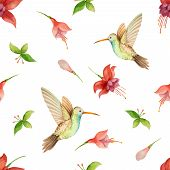 stock photo of hummingbirds  - Watercolor pattern fuchsia flowers and Hummingbird on white background vector illustration - JPG