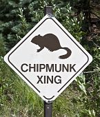 Chipmunk Crossing
