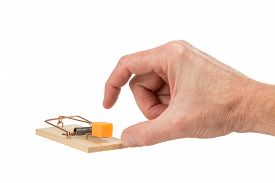 pic of mouse trap  - Male hand ready to pluck a large piece of cheddar cheese that is placed as bait in a mouse trap - JPG