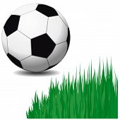 Isolated мector soccer ball and bush green grass