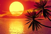 red Sunset und palm