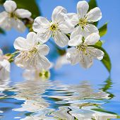 picture of beautiful flower  - beauty spring flowers - JPG
