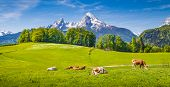 Idyllic Summer Landscape In The Alps With Cow Grazing poster