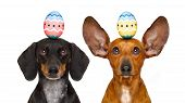 Easter Bunny Dogs With Egg poster