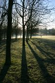 Early Morning Parkland