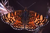 Colorfulbutterfly7