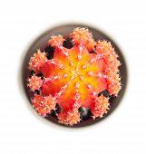 Orange Cactus Closeup
